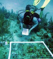 SFS: Turks & Caicos - Marine Resource Management Studies